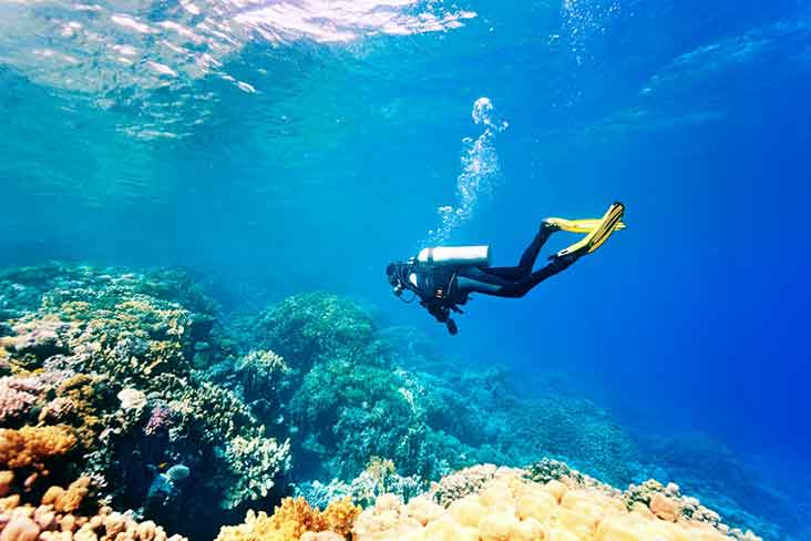 Image result for snorkeling in galle