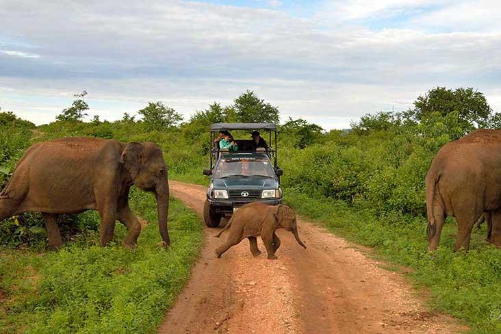 Jeep safari udawlawe