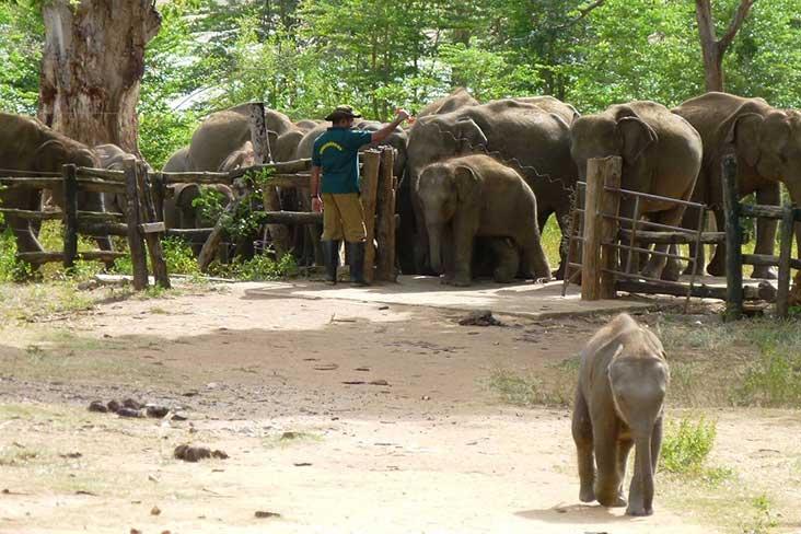 Udawalawa elephant home