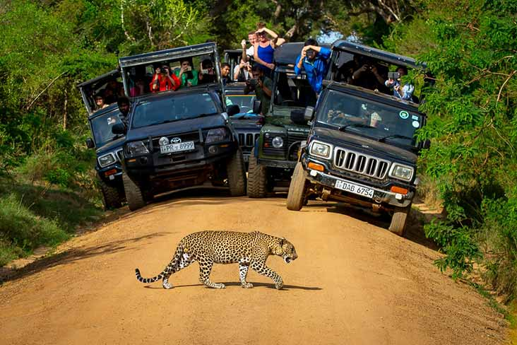 Jeep Safari Yala