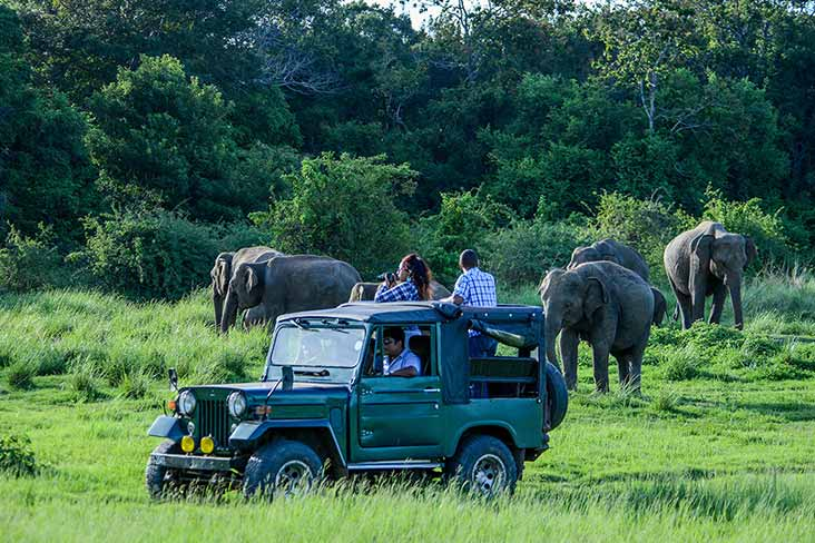 Jeep Safari in Wilpattu National Park