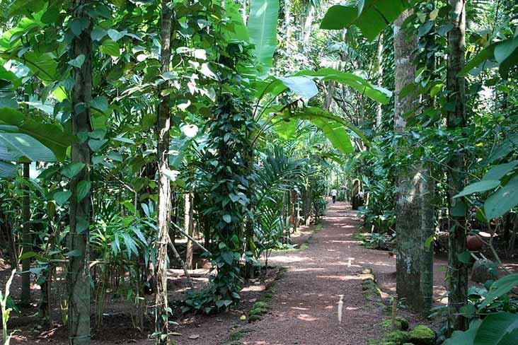Ayurveda Spice Garden