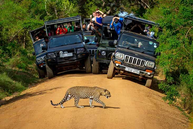 Jeep Safari in Yala