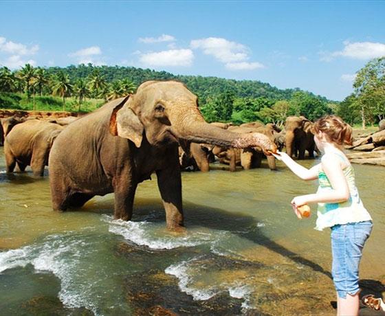 Pinnawala Elephant Orphange