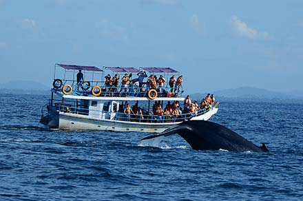 Whales and Dolphin Watching in Sri Lanka